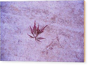 Maple Leaf On Rock Wood Print by Randy Muir