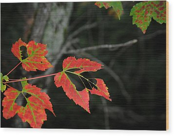 Maple Leaves Wood Print by Steven Scott