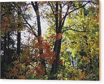 Maple Mania 16 Wood Print by Will Borden