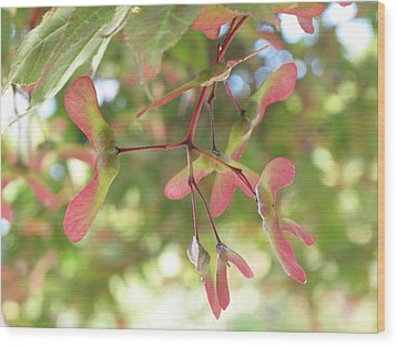 Maple Seeds Wood Print by Steve Gravano