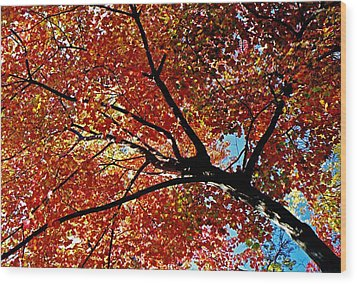 Maple Tree In Autumn Glow Wood Print by Juergen Roth