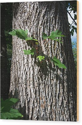 Maple Trunk Wood Print by Ken Day