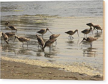 Marbled Godwit Birds At Sunset Wood Print by Christine Till