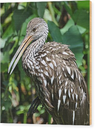 Marbled Godwit Wood Print by Rose  Hill