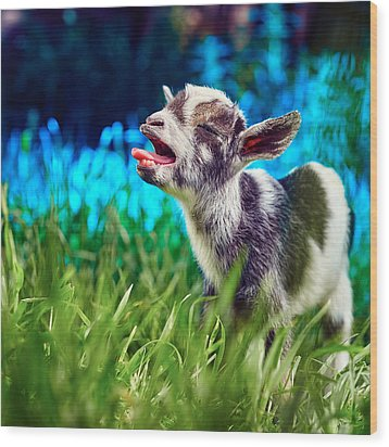Baby Goat Kid Singing Wood Print