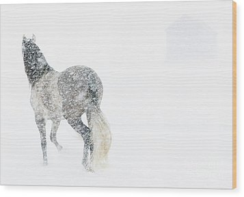Mare In A Blizzard II Wood Print by Carol Walker