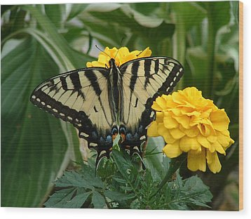 Marigold And Butterfly Wood Print by Emerald GreenForest