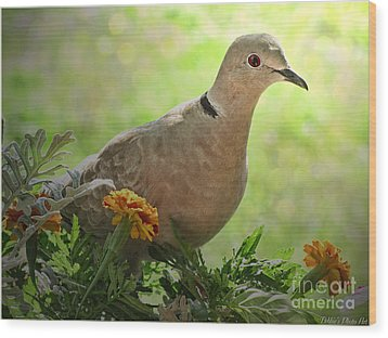 Wood Print featuring the photograph Marigold Dove by Debbie Portwood
