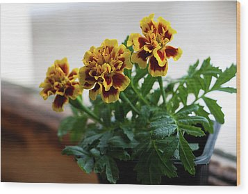 Marigold In Winter Wood Print by Jeff Severson