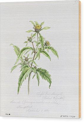 Marigold Wood Print by WJ Linton