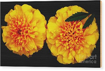 Wood Print featuring the photograph Marigolds With Oil Painting Effect by Rose Santuci-Sofranko