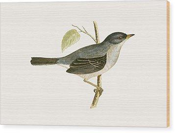 Marmora's Warbler Wood Print by English School