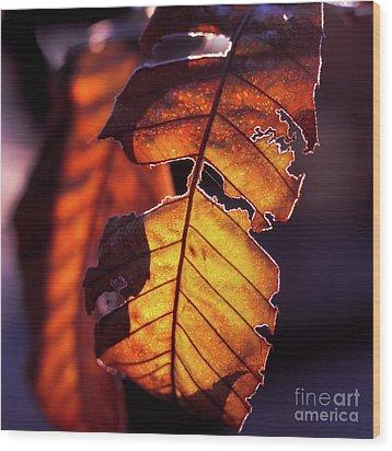 Wood Print featuring the photograph Maron by Tatsuya Atarashi