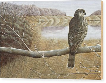 Wood Print featuring the painting Marsh Hawk by Laurie Stewart