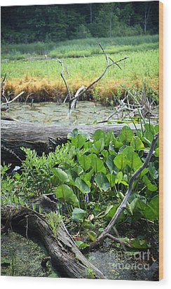 Marsh Wood Print by Jeannie Burleson