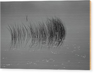 Wood Print featuring the photograph Marsh Reflection by Albert Seger