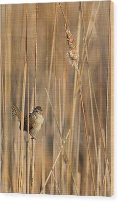 Marsh Wren Wood Print