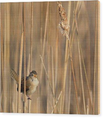 Marsh Wren Square Wood Print