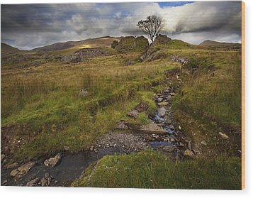 Wood Print featuring the photograph Marshland At Rhyd Ddu, Wales by Richard Wiggins