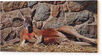 Marsupial Centerfold Wood Print by Lori Tambakis