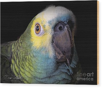 Marty The Blue Front Amazon Wood Print by Melissa Messick