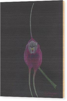 Masdevallia Infracta Orchid Wood Print