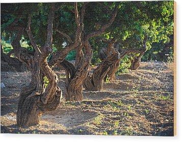 Mastic Tree   Wood Print by Emmanuel Panagiotakis