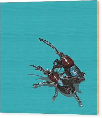 Mating Weevils Wood Print