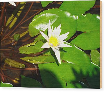 Maui Lily Wood Print by Tamara Bettencourt