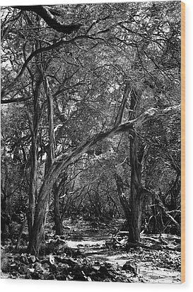 Maui Trees Wood Print by Art Shimamura