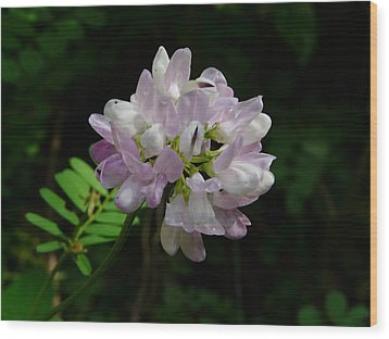 Mauve Flower Wood Print by Valerie Ornstein
