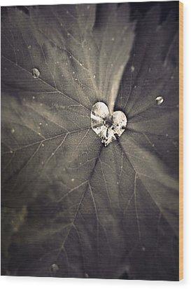 May 11 2010 Wood Print by Tara Turner