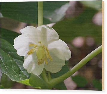 May-apple Blossom Wood Print