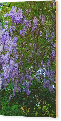 May Wisteria At Duke Gardens Wood Print by Angela Annas