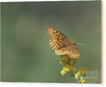 Meadow Fritillary Wood Print by Randy Bodkins