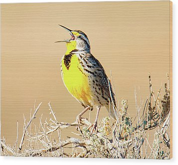 Meadow Lark Wood Print
