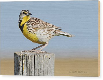 Wood Print featuring the photograph Meadowlark 1 by Don Durfee