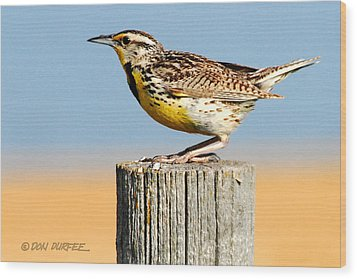 Wood Print featuring the photograph Meadowlark 2 by Don Durfee