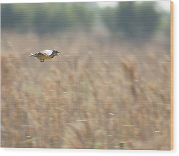 Wood Print featuring the photograph Meadowlark Flying by Lynda Dawson-Youngclaus