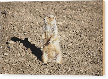 Mean Old Prairie Dog Wood Print by Christopher Wood