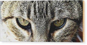 Me...dangerous...never. Wood Print by Valerie Ornstein