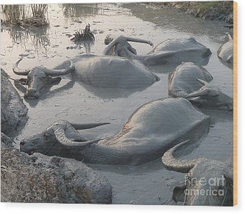 Wood Print featuring the photograph Medium Shot Of A Group Of Water Buffalos Wallowing In A Mud Hole by Jason Rosette