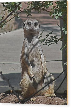 Meerkat 2 Wood Print by Ernie Echols