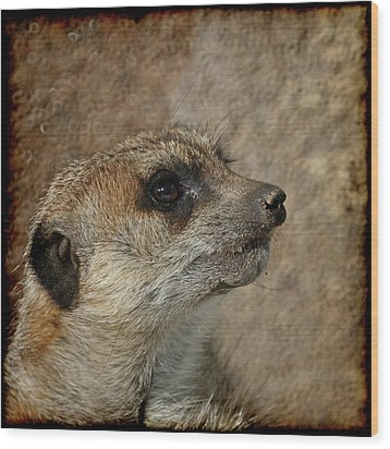 Meerkat 3 Wood Print by Ernie Echols