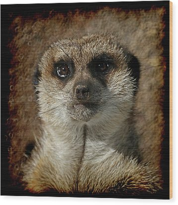 Meerkat 4 Wood Print by Ernie Echols