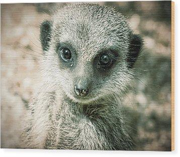 Wood Print featuring the photograph Meerkat Animal Portrait by Chris Boulton