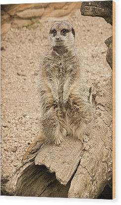 Wood Print featuring the photograph Meerkat by Chris Boulton