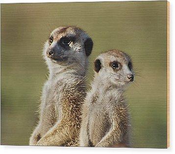 Meerkat Duo Wood Print