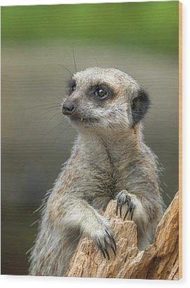 Meerkat Model Wood Print by Racheal  Christian