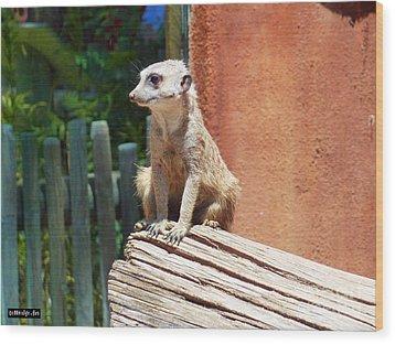 Meerkat Sentry Wood Print
